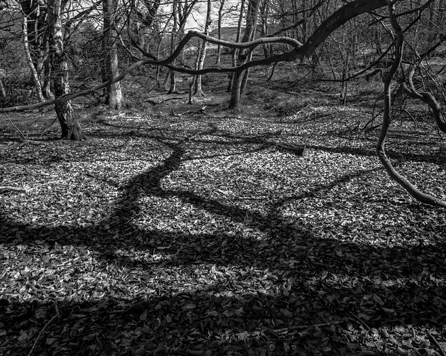 Branches and echo, shadows and leaves (Hyons Wood)