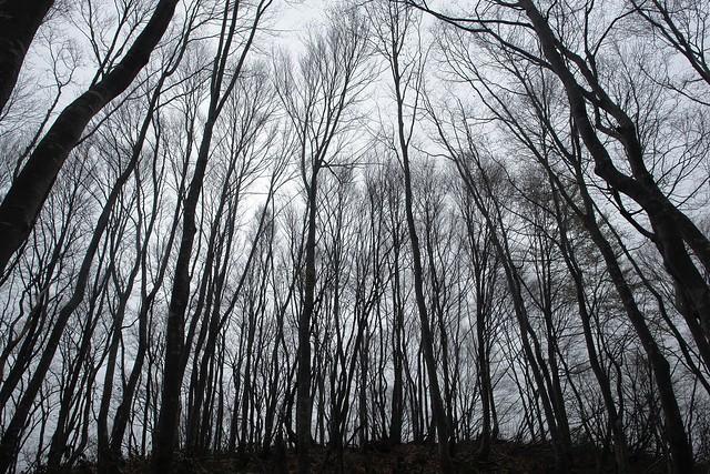 春の高尾山、吉次山周回 その5
