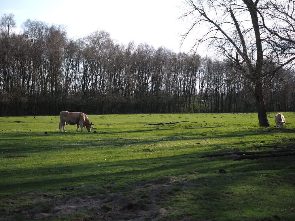 Spring in Den Bosch