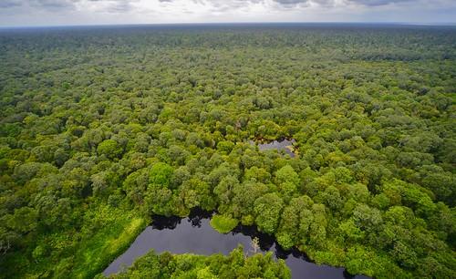 green water sumatra indonesia wetlands biodiversity tropicalrainforest tropicalforest riausumatra tropicalbiodiversity