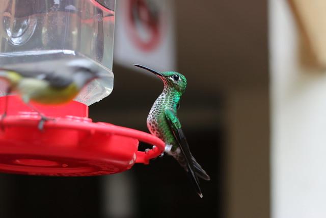 Jardín del colibrí en www.oddcatrina.com