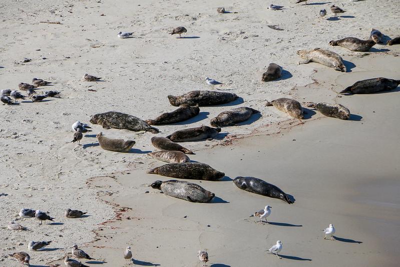 10.16. - San Diego. Children's Beach