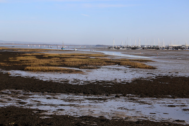 Saltmarsh at Selsmore, Hayling Island
