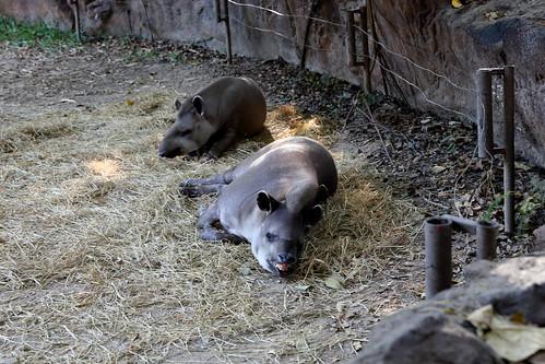 夜間動物園