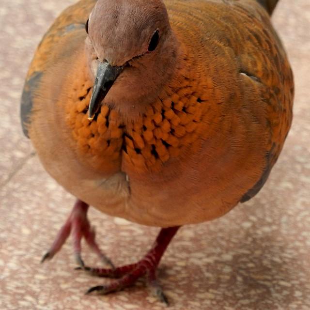 I Love My Dove