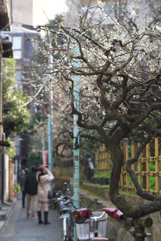 湯島天神梅まつり 東京路地裏散歩 2016年2月28日