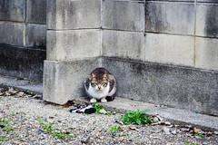 Today's Cat@2016-03-24