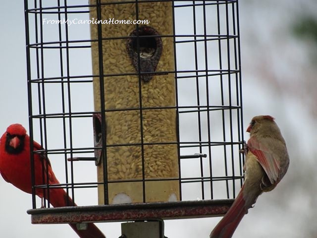 Cardinals March 2016 2