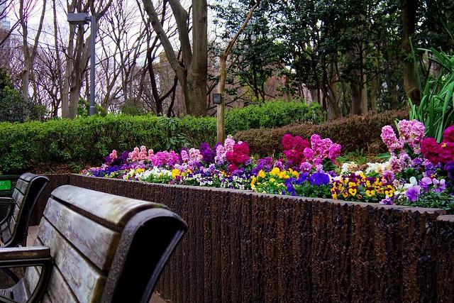 2016年3月13日新宿中央公園-9