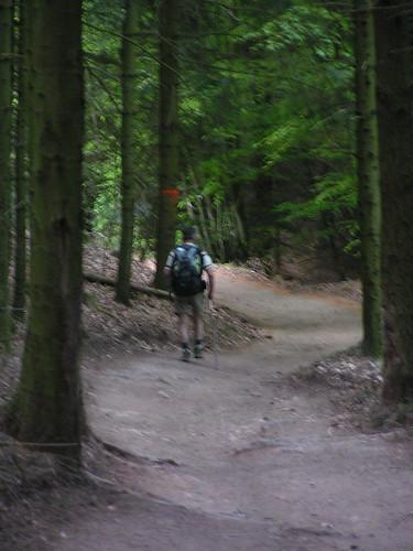 20080511 20487 0901 Jakobus Wald Weg Pilger