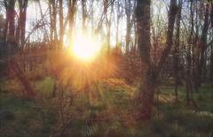 Evening Sun  #iphoneography #snapseed #enlight #landscape #eveningsun