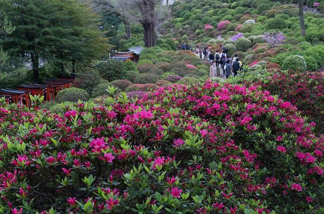 2016/04/09根津神社つつじ祭り-40