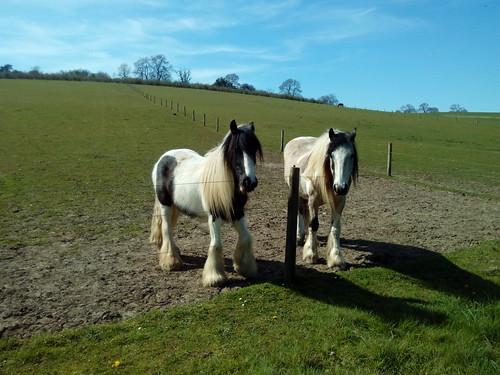 Horses - Berkhamsted Circular