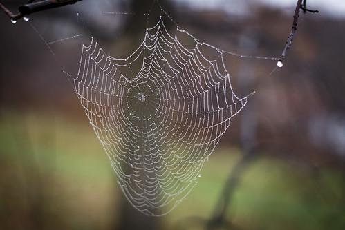 lines spider web spiderweb symmetry