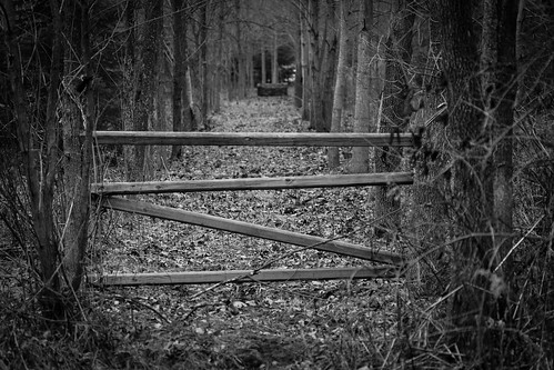 A barrier in Byer woods