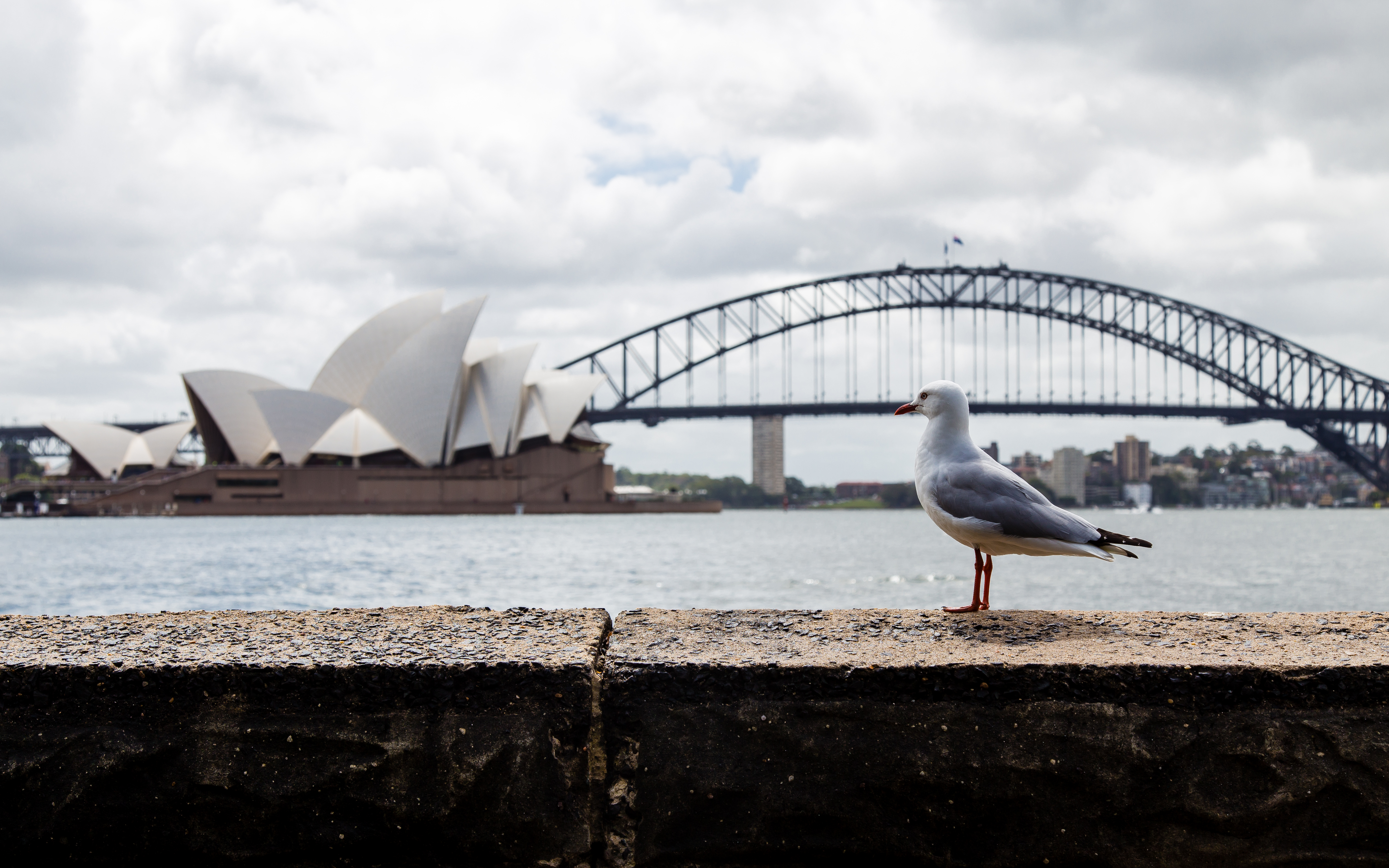 Sydney-8996