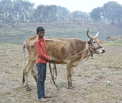 """""""Due to Simhastha, all the grazing land was removed.  About 1000 cattle live around the Gaughat area, and owners have to spend Rs.200-300 per day to feed their animals which have added to the additional financial burden on farmers"""", says Kesar Sing Pujari, a farmer from Gaughat, Ujjain."""