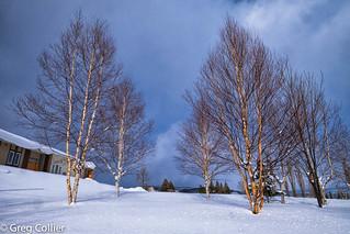 furano_trees.jpg