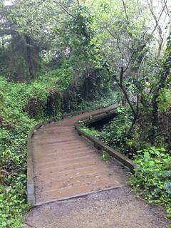Coastal Trail footbridge