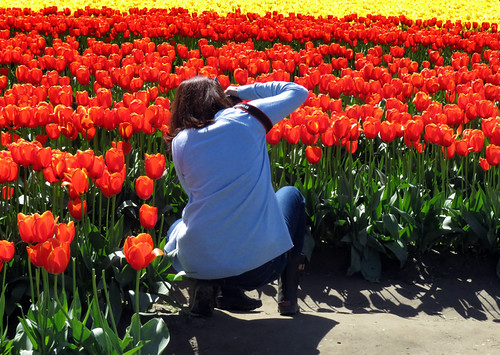 A Photographer in one of La Conner's tulip fields