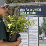 Sydney - City of Sydney's free tree giveaway, Sydney Park