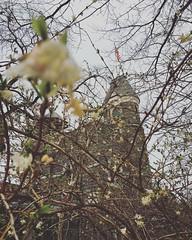 Belvedere Castle #centralparkbloomwatch2016 #centralpark #manhattan #nyc