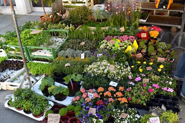 Plants & Flowers at Combourg Market, Brittany | www.rachelphipps.com @rachelphipps