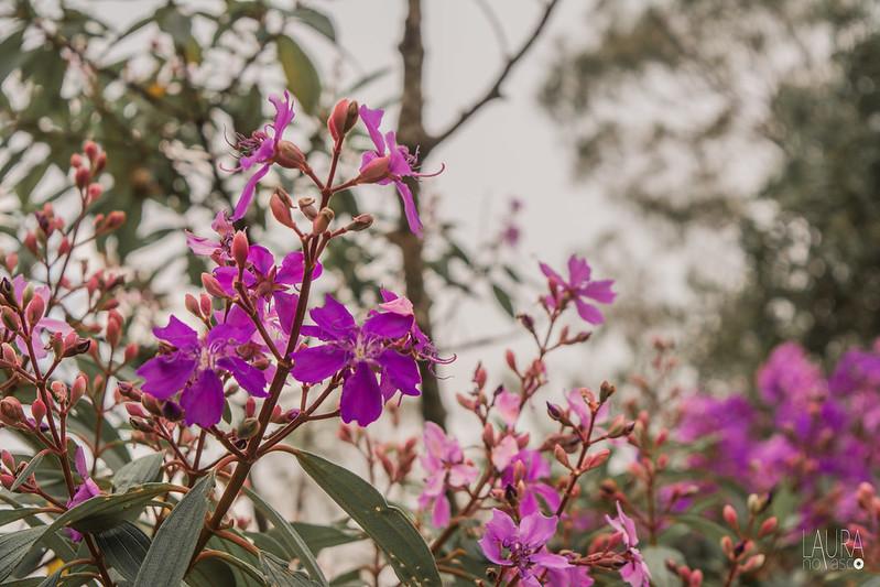 Flores, cores...