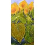 3 x Sonnenblumen