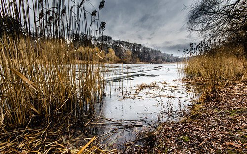 #2/52 Grenadier Pond in January, High Park, Toronto