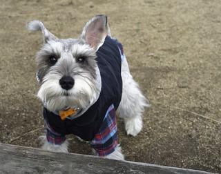 תמונה של Osaka Castle Park ליד Ōsaka-shi. dog fashion japan style classy