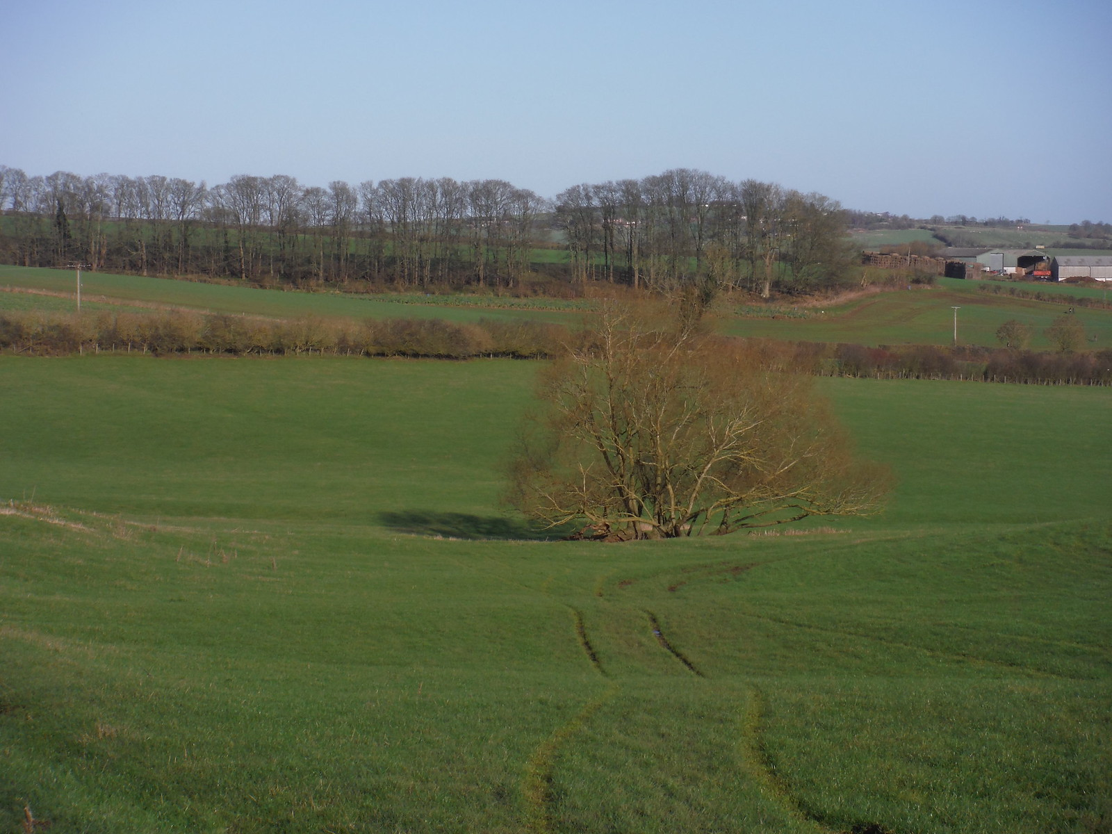 Tree in Valley NE of Long Crendon, on way to Wombwell's Farm SWC Walk 191 Haddenham Circular (via Brill)
