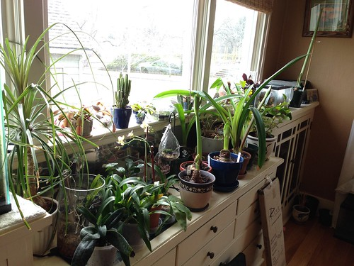 My plant window.