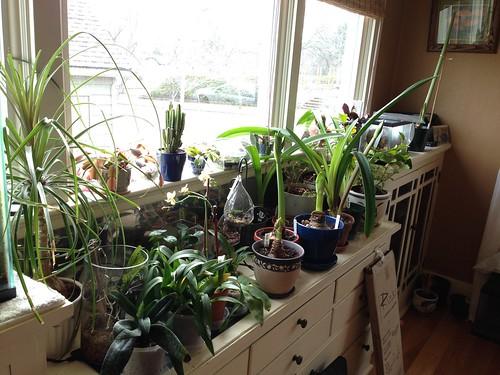 My plant window.