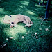Sleeping puppy by Stephen Dowling