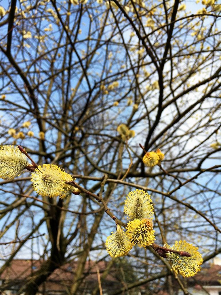 Spring Ramification