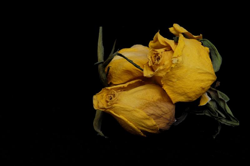 Blog 170416-Rose-LND-Apr2016-073