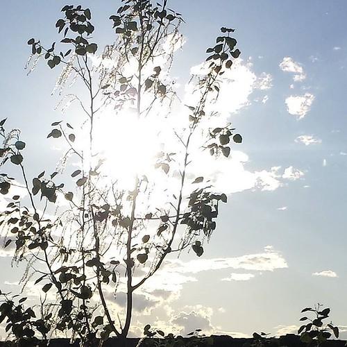 #castelnou. Un día perfecto para salir a dar un #paseo al #sol