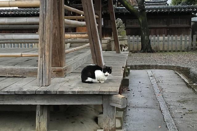Today's Cat@2016-03-22