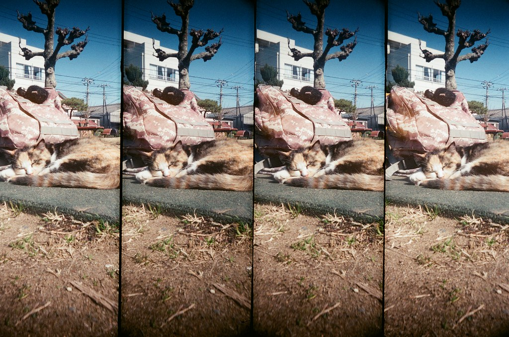 銚子市 千葉縣 Choshi, Japan / AGFA VISTAPlus / SuperSampler 在銚子亂走亂晃,到處把影像帶回來。  我好想念肥肥貓!  SuperSampler Dalek AGFA VISTAPlus ISO400 8266-0037 2016/02/05 Photo by Toomore