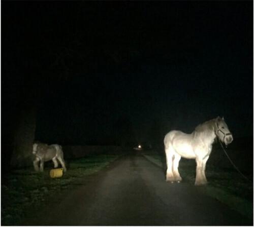 gypsy ponies