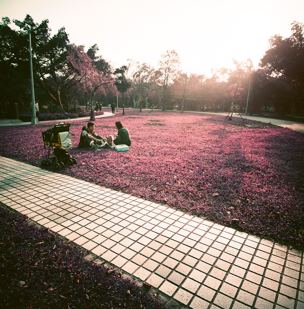 大安森林公園 / Purple / Lomo LC-A 120 難得出現好天氣,就一定要出門曬太陽、拍照!  Lomo LC-A 120 Lomography LomoChrome Purple XR 100-400 120mm 6494-0002 2015/01/09 Photo by Toomore