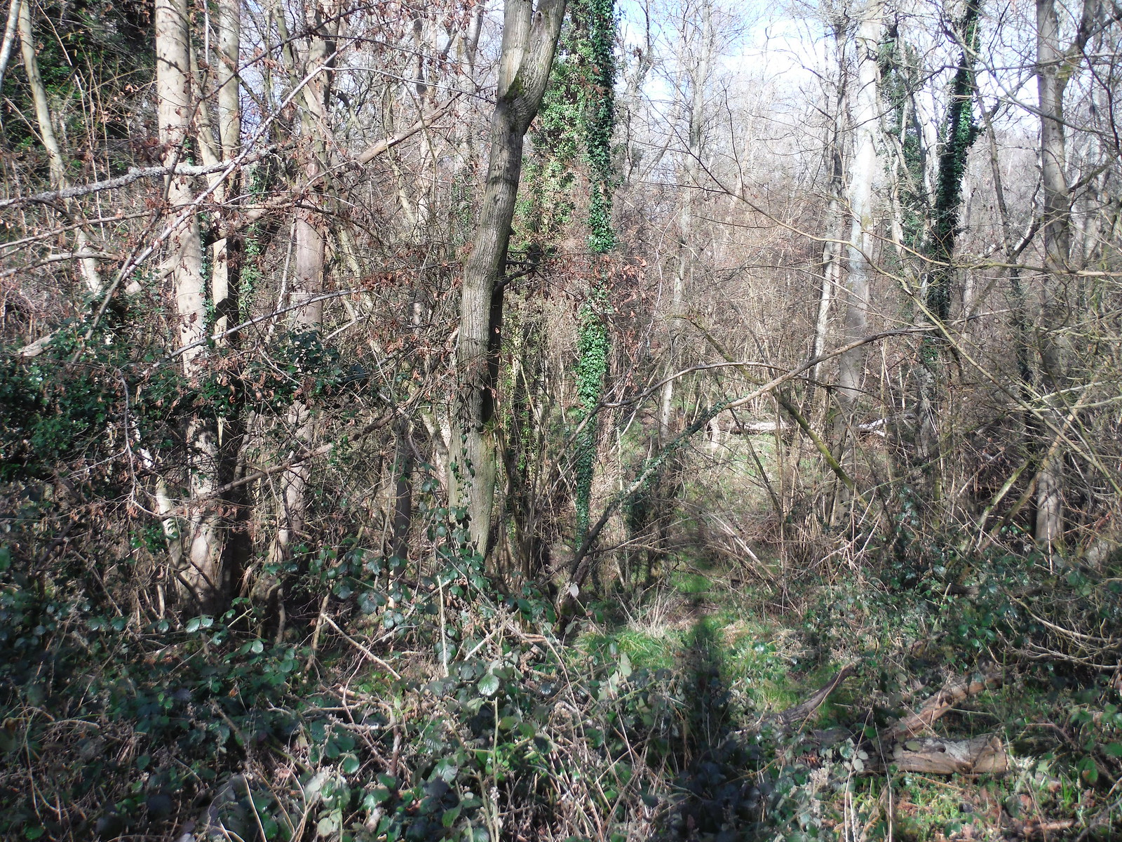 Old Copse, Beenham SWC Walk 117 Aldermaston to Woolhampton (via Stanford Dingley)