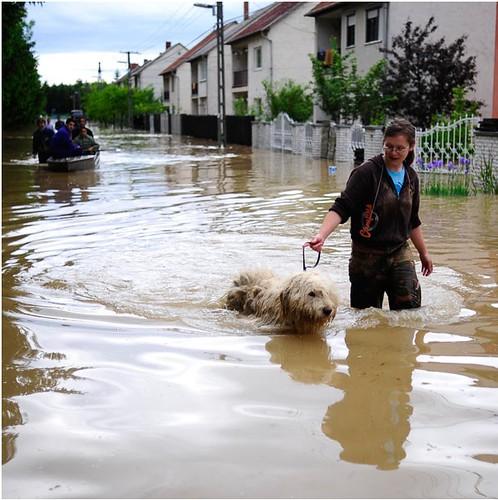 बाढ़ से प्रभावित निवासी