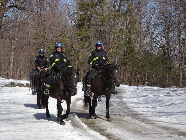Patrolling Mont-Royal