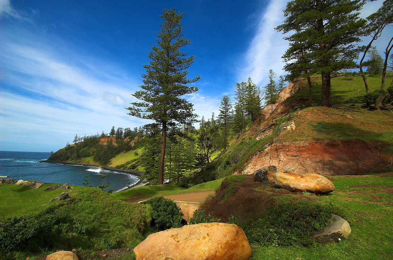 Norfolk Island pines. Image credit thinboyfatter