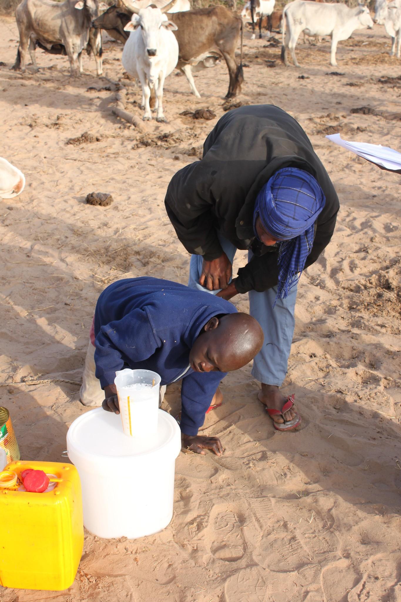 Measuring milk in Senegal market