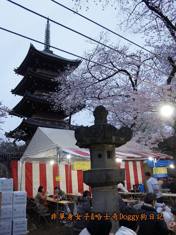 日本東京上野恩賜公園櫻花16