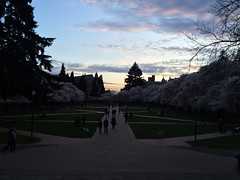 View Down the Axis, Dusk (Blue Hour) on the University of Washington Quad