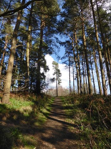 Chaddesley Woods